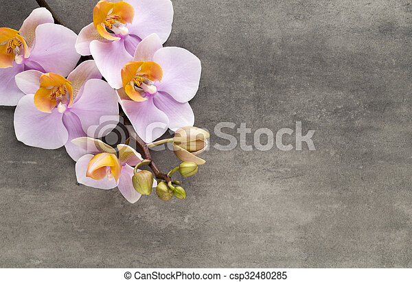 Beautiful pink orchid on a gray background. - csp32480285
