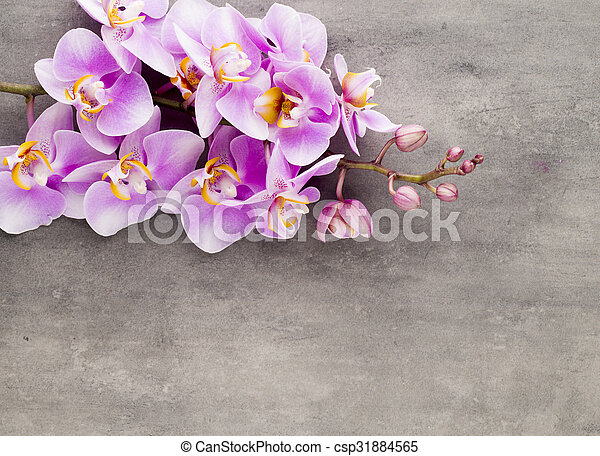 Beautiful pink orchid on a gray background. - csp31884565