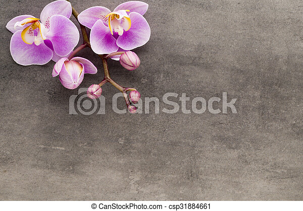 Beautiful pink orchid on a gray background. - csp31884661