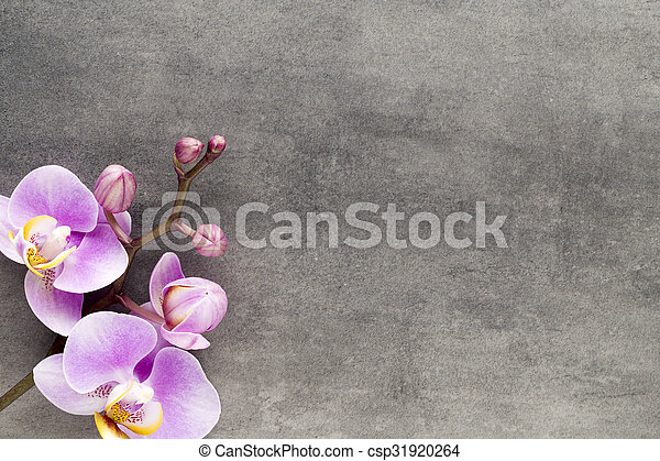 Beautiful pink orchid on a gray background. - csp31920264