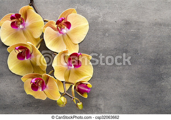 Beautiful pink orchid on a gray background. - csp32063662