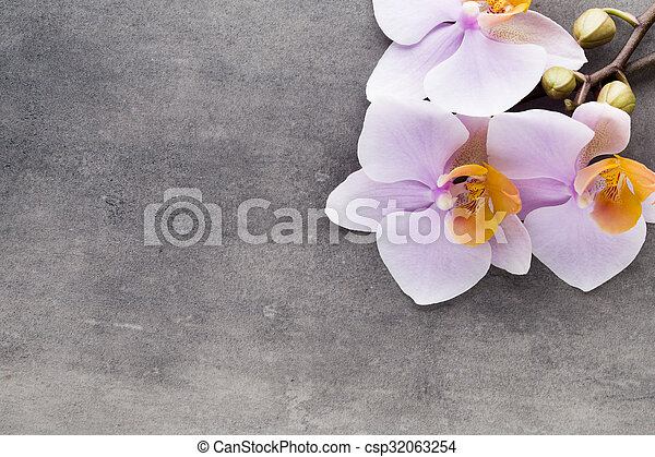 Beautiful pink orchid on a gray background. - csp32063254