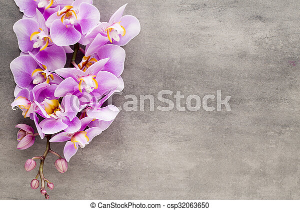 Beautiful pink orchid on a gray background. - csp32063650