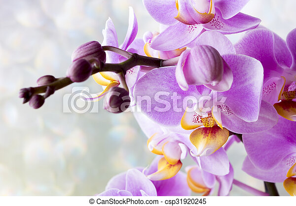 Beautiful pink orchid on a gray background. - csp31920245