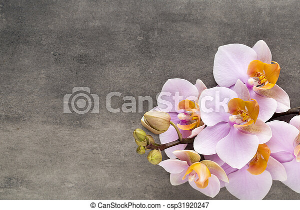 Beautiful pink orchid on a gray background. - csp31920247