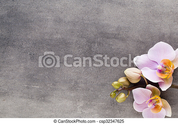 Beautiful pink orchid on a gray background. - csp32347625