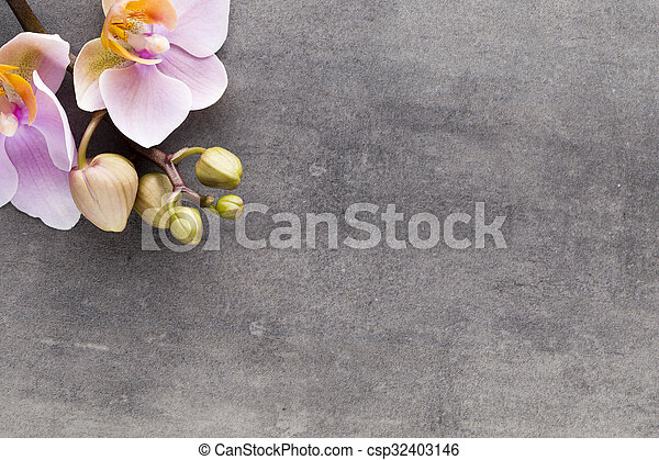 Beautiful pink orchid on a gray background. - csp32403146
