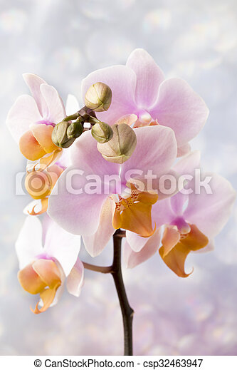 Beautiful pink orchid on a gray background. - csp32463947