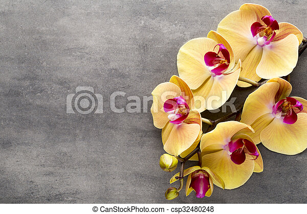Beautiful pink orchid on a gray background. - csp32480248