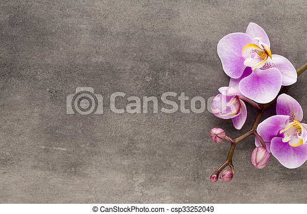 Beautiful pink orchid on a gray background. - csp33252049