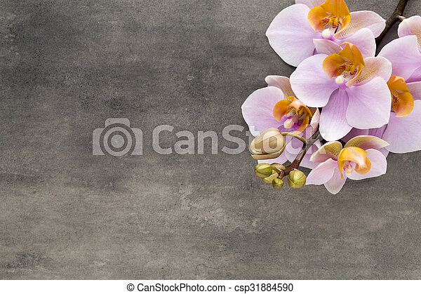 Beautiful pink orchid on a gray background. - csp31884590