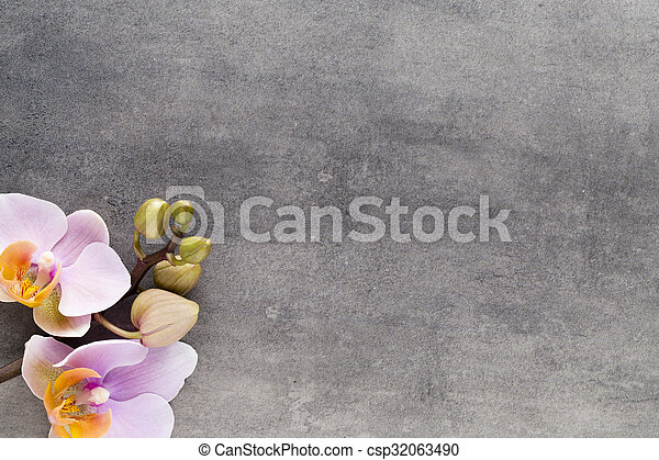 Beautiful pink orchid on a gray background. - csp32063490