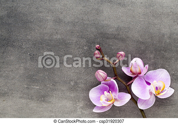 Beautiful pink orchid on a gray background. - csp31920307