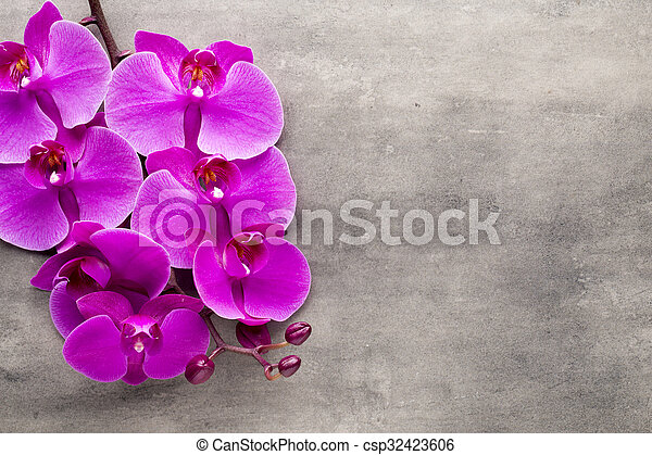 Beautiful pink orchid on a gray background. - csp32423606