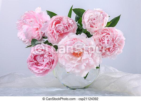 beautiful pink peonies - csp21124392