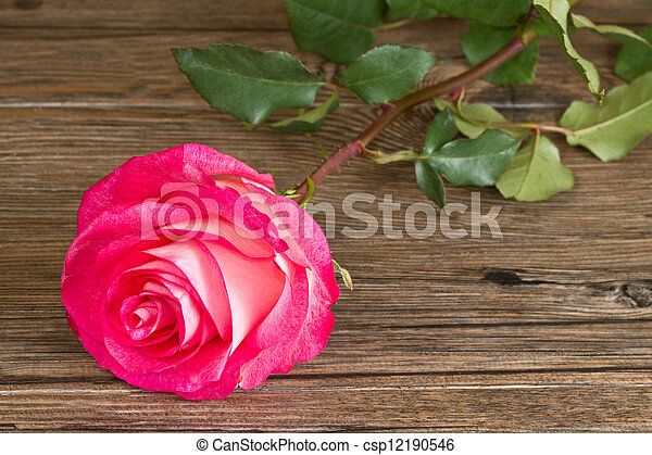 Beautiful pink roses on wooden background - csp12190546