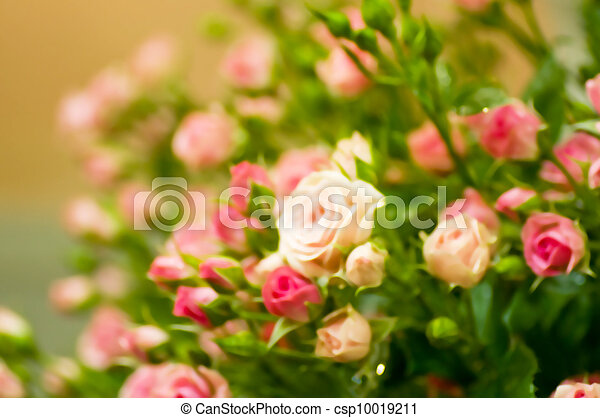 Beautiful pink roses - csp10019211