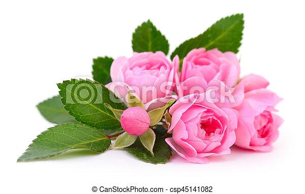 Beautiful pink roses. - csp45141082