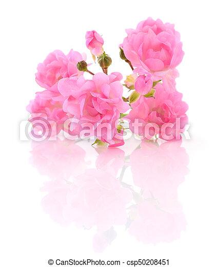 Beautiful pink roses. - csp50208451