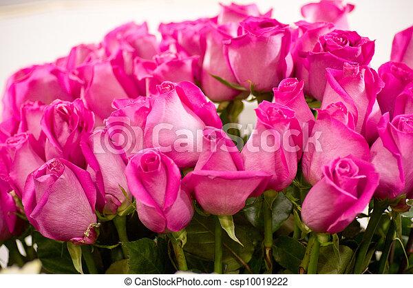 Beautiful pink roses - csp10019222