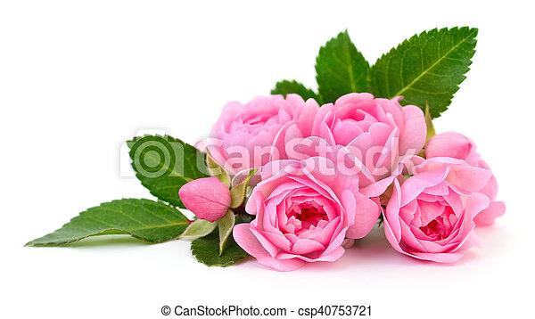 Beautiful pink roses. - csp40753721