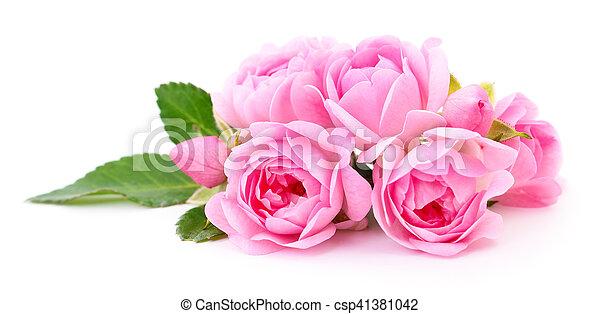 Beautiful pink roses. - csp41381042