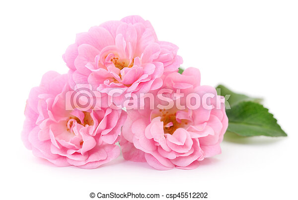 Beautiful pink roses. - csp45512202