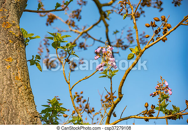 Beautiful pink tree flowers - csp37279108