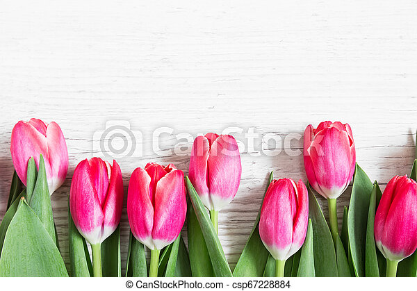 Beautiful pink tulips on wooden background - csp67228884