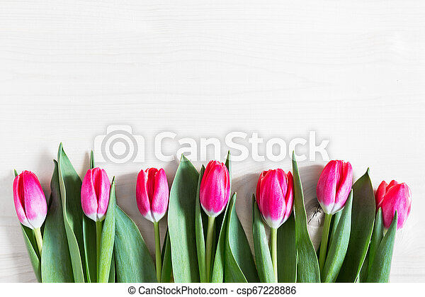 Beautiful pink tulips on wooden background - csp67228886