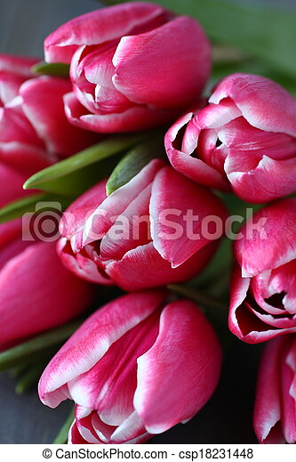 Beautiful pink tulips on wooden background - csp18231448