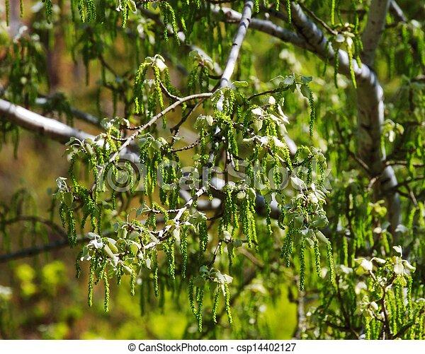 beautiful plants - csp14402127