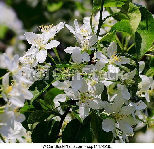beautiful plants - csp14474236