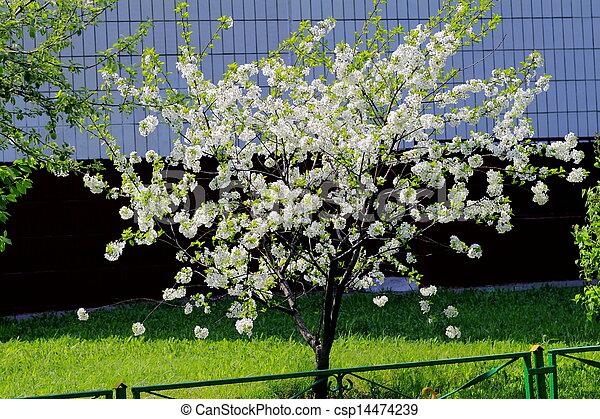 beautiful plants - csp14474239