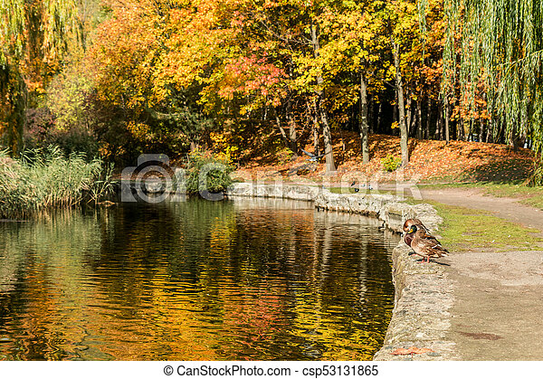 Beautiful pond with trees reflection in the water in the city park on a sunny fall day. - csp53131865