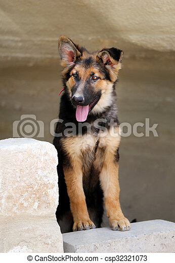 Beautiful portrait of a dog - csp32321073
