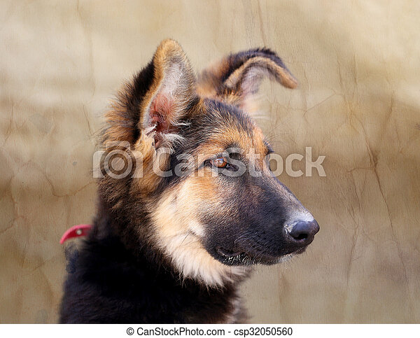 Beautiful portrait of a dog - csp32050560