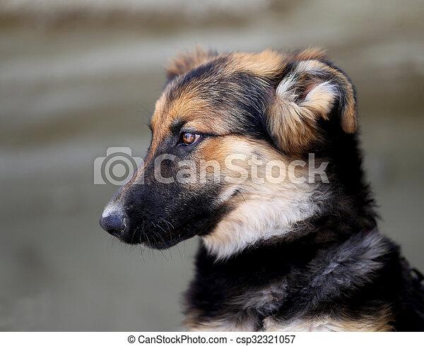 Beautiful portrait of a dog - csp32321057