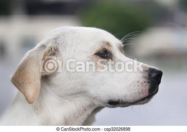 Beautiful portrait of a dog - csp32026898