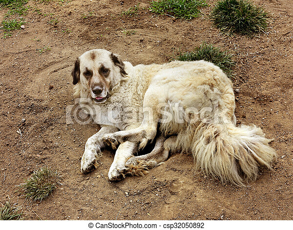 Beautiful portrait of a dog - csp32050892