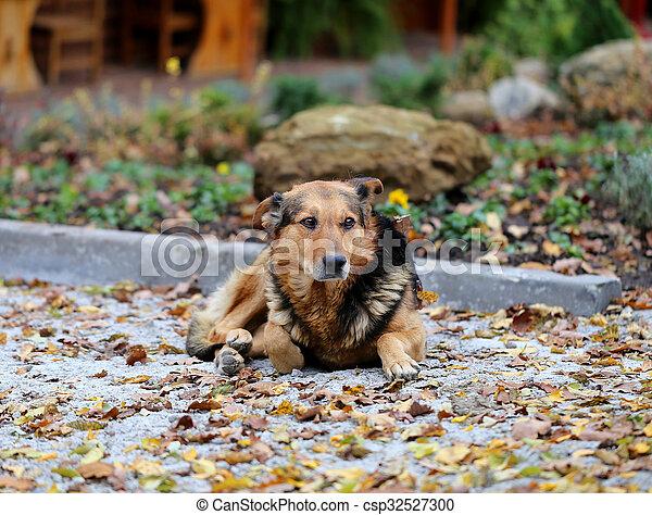 Beautiful portrait of a dog - csp32527300