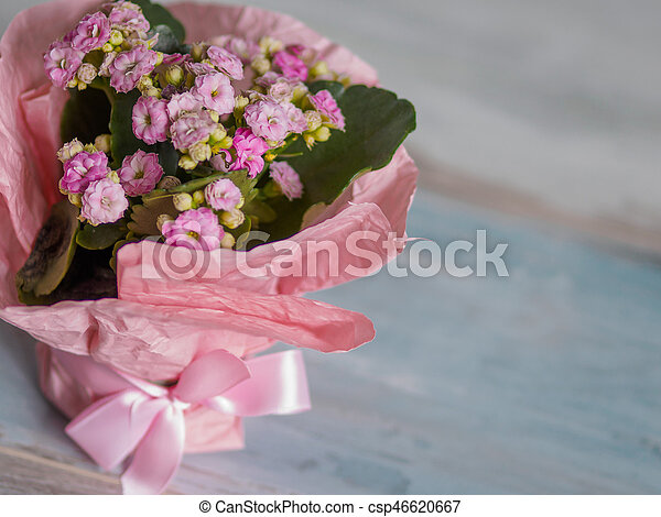 Beautiful pot of flowers wrapped in pink paper gift beautiful pot beautiful pot of flowers wrapped in pink paper gift csp46620667 mightylinksfo