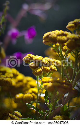 Beautiful Purple And Yellow Wild Flowers Mountain Flowers