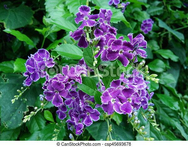 Beautiful purple flowers - csp45693678
