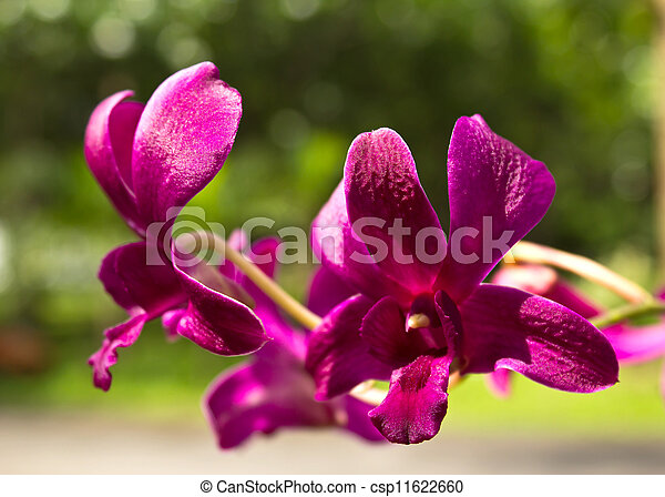 Beautiful purple orchid - csp11622660