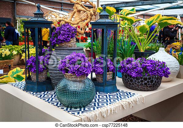 Beautiful purple spring flowers in the ornamental ceramic flowerpot - csp77225148