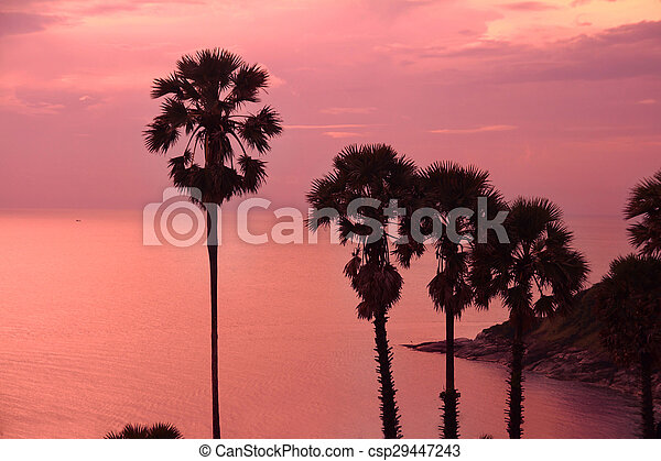 beautiful purple sunset with palm trees silhouette - csp29447243