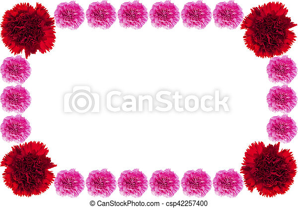 Beautiful red and pink carnation. - csp42257400