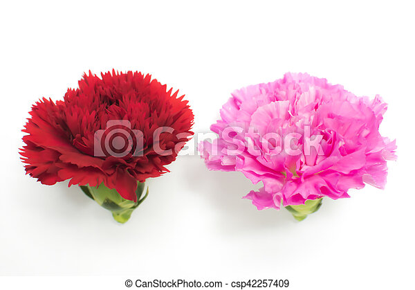 Beautiful red and pink carnation. - csp42257409
