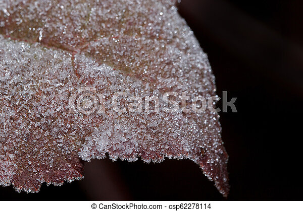 Beautiful red leaf covered with hoarfrost. Close up. - csp62278114